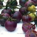 Chocolate Cherry Tomato Plant Seeds, Professional Pack, 100 Seeds / Pack, Clusters of  Tomatoes #NF830