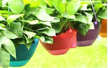 Free shipping,2pcs,lazy flowerpot,Petunia hybrida special pot,hanging baskets flower pots,petunias,smart flowerpot,free watering