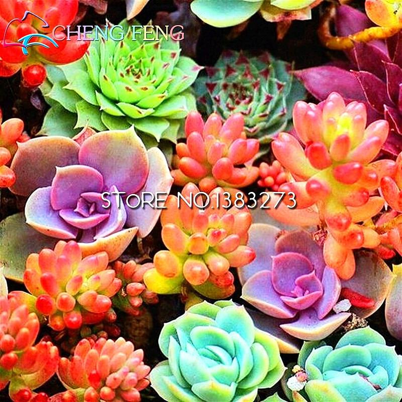 100pcs/bag Mix Succulent Seeds Lotus Lithops Pseudotruncatella Bonsai Seeds For Home Garden Diy Plant Flower Pots Planters Seed