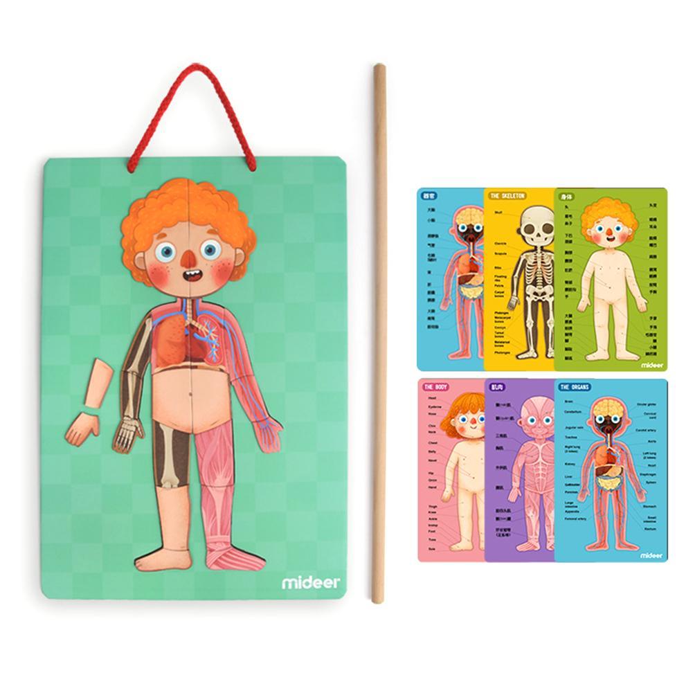 Jouets éducatifs pour enfants 4 couches de Structure de corps humain magnétique Puzzle cognitif pour les garçons et les filles