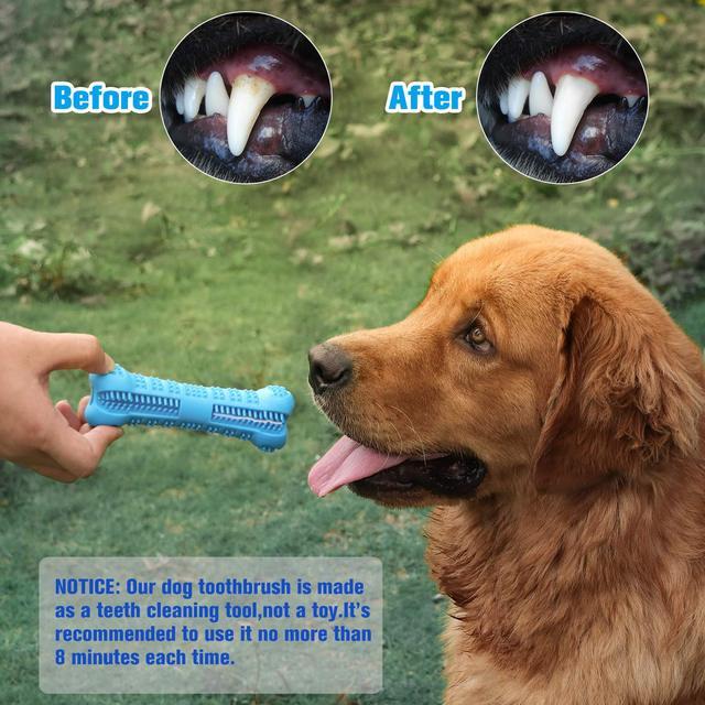 Toothbrush Dog Toy  1
