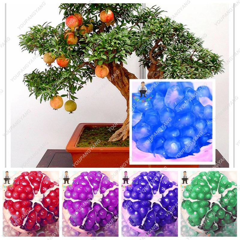 20pcs/lot Blue Pomegranate Seeds Bosnai Sweet Delicious Fruit Seed Succulents Plant Tree Seed For Garden Plants Semillas Flowers