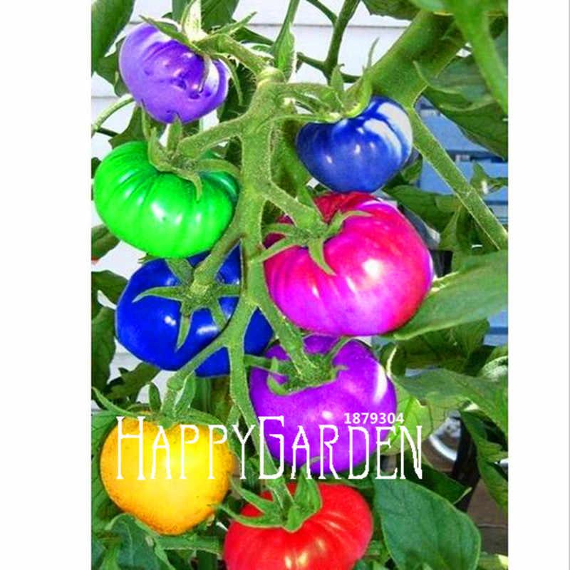 Новинка 2018! 100 шт./упак. Радужный томатный Флорес, бонсай экологически чистые овощные и фруктовые растения, Горшечное растение для дома и сада