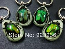 FREE SHIPPING 20 PCS REAL GREEN BEETLE GLOW LUCITE KEYRING KEYCHAIN JEWELRY TAXIDERMY GIFT