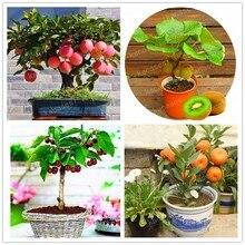 4 kind fruit,bonsai fruit tree bonsai,vegetable and garden plant Delicious apple orange kiwi cherry total