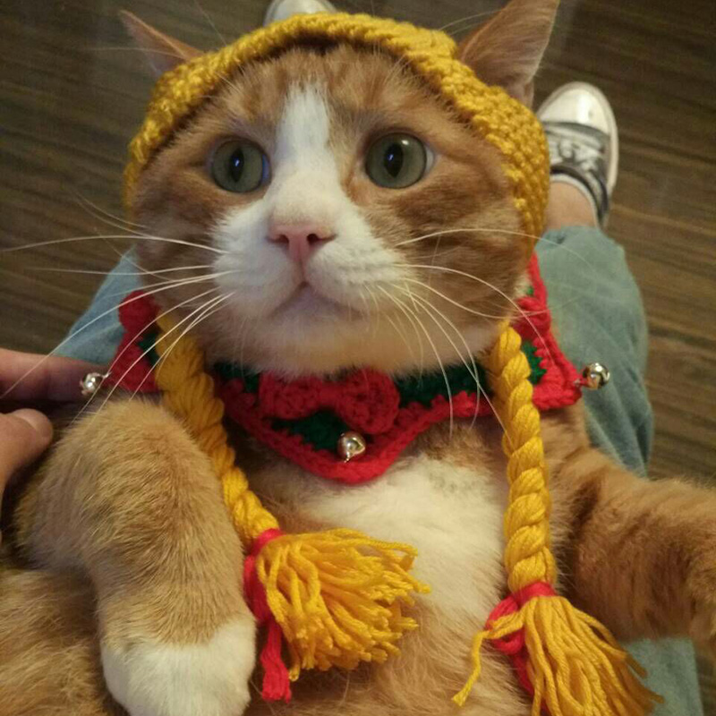b018d5a1 The little girl pigtail Wig Cap Hat Cap Cat Pet Costume Wang meow handmade  headwear funny cat dog knitted hat-in Cat Clothing from Home & Garden on ...