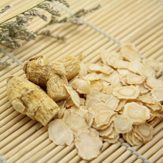 ZLKING 50PCS Ginseng Bonsai Plants For Home Garden Rare Perennial Fragrant Plants Supernatural Products Natural Herbs 5