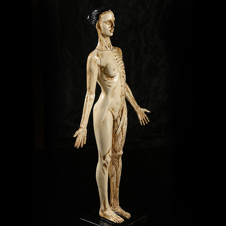 45 cm resina músculo Anatomía Humana modelo de cráneo para el arte ...