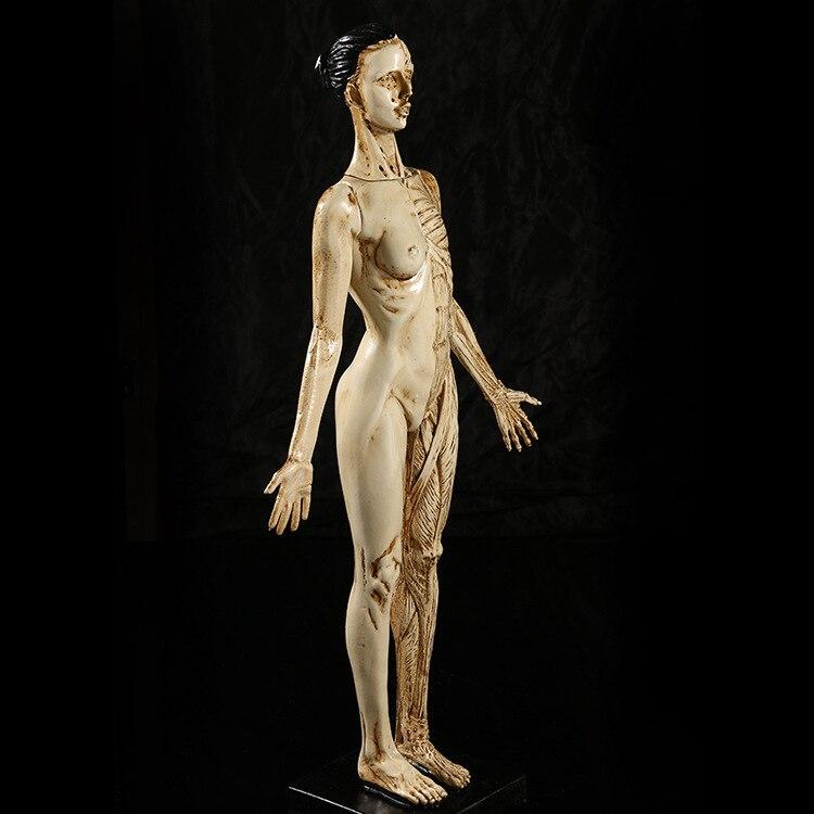 43 cm resina mujer Anatomía Humana cráneo modelo para arte en trauma ...