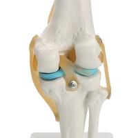 Life Size Human anatomy skeleton Knee Joint Anatomical Mode l Heart skull brain skull mod el in trauma nursing manikin train