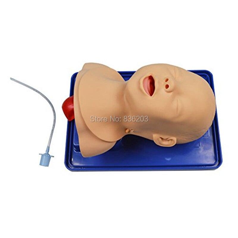 Menschlichen Erweitert Infant Intubation anatomie Anatomisch ...