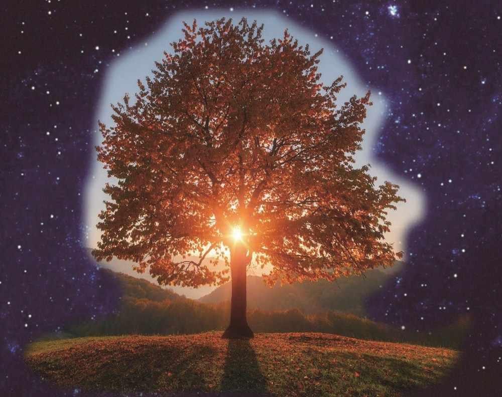 עץ מלא landschap 5d ציור יהלומי diy ציור יהלומי rhinestones צבע רקמה עם יהלומים מחוררת מכותנה דיאמנט plein