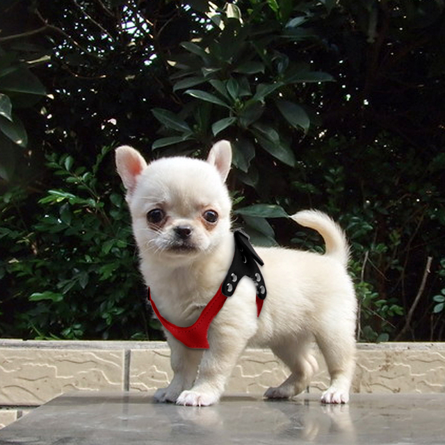 Soft Leather Small Dog's Harness