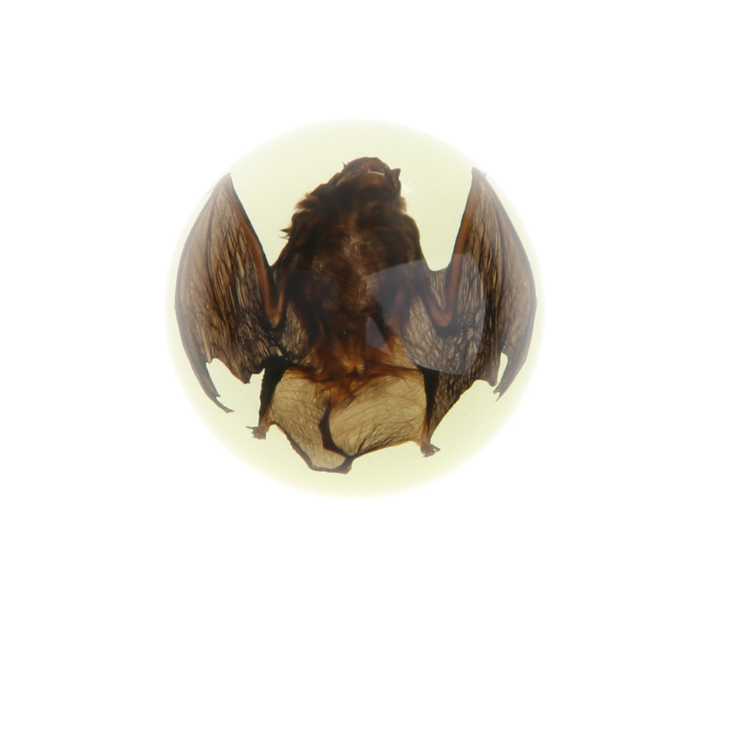 Bat In Dome Resin Paperweight (Glow In Dark), Education Insect Specimen Collection Display