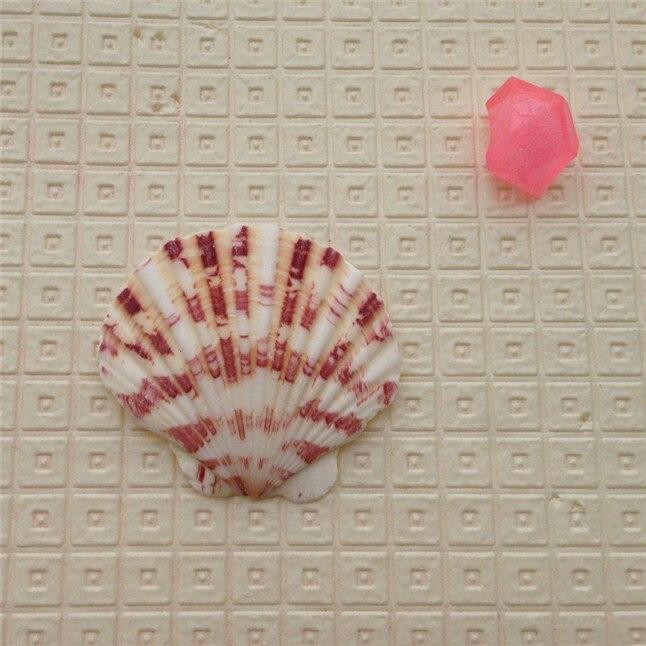 seashell7