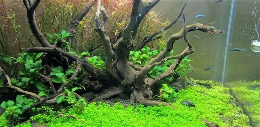 Diy driftwood for aquarium 1000 aquarium ideas for Fish tank driftwood
