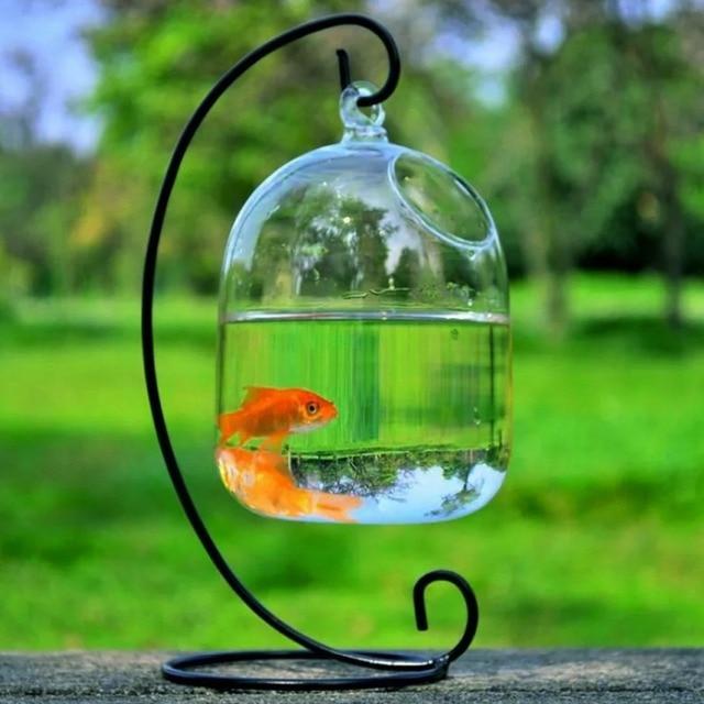 Clear 15cm Height Hanging Glass Aquarium Fish Bowl  4