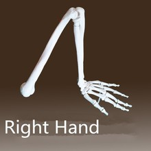 Buy upper limb skeleton and get free shipping on AliExpress.com