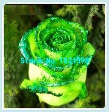 Потеря Продвижение 50 шт. Редкие Золотой Зеленый Выросли Семена Сильный Ароматный Сад Роз Цветы Естественный Прирост Домашний Сад Бесплатная Доставка