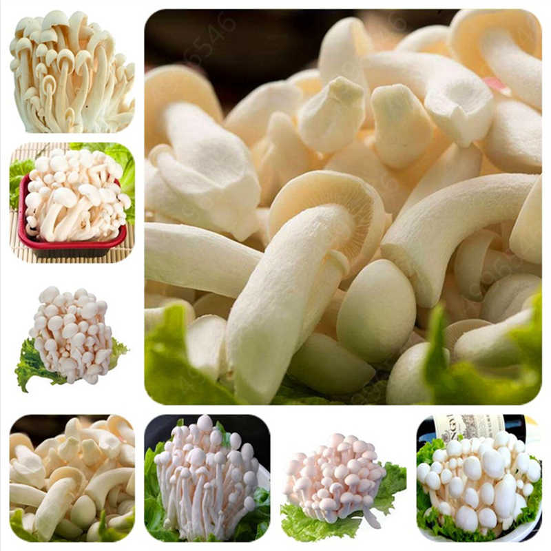 Big Sale! 500 Pcs Delicious White Mushroom bonsai Green Vegetables Bonsai plant Very Easy To Grow For Home and garden plant