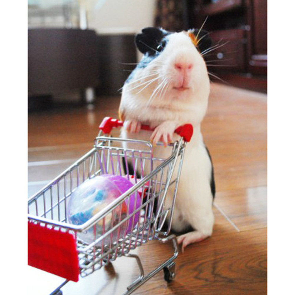 New Funny Parrot Bird Cats Hamster Mouse Trolley Parrot Toys Supermarket Shopping Cart Kids Intelligence Growth Box Toy Supply