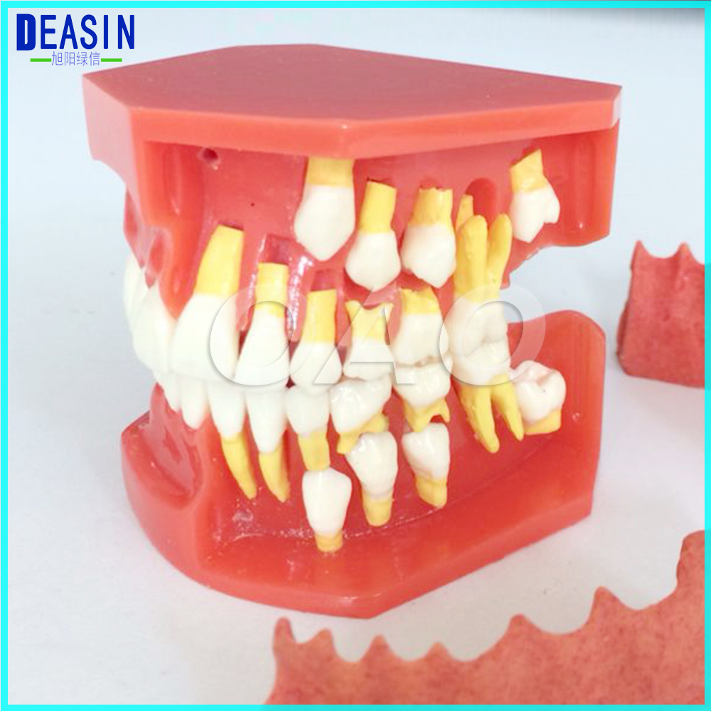 New Arrival Dental Tooth Teeth Anatomical Anatomy Model Children Dental Model peace education at the national university of rwanda