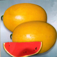 10 Seeds /Pack, Giant Watermelon Seeds Yellow Queen Super Sweet Watermelon organic fruit seeds plant for home garden