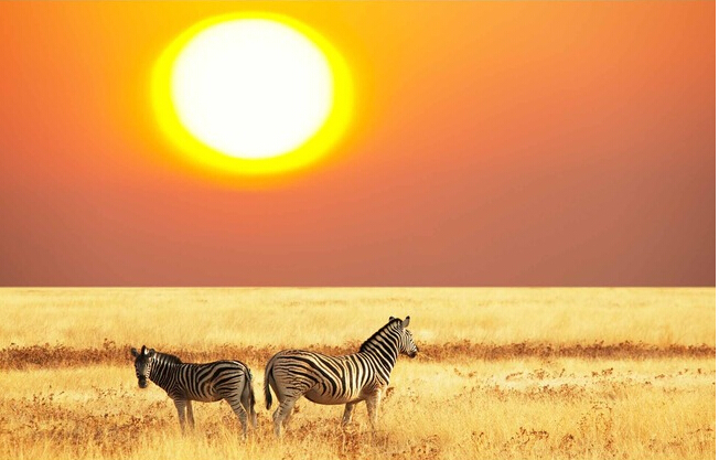 Custom papel DE parede infantil, sunset African grass zebra murals for the sitting room the bedroom wall fabric papel DE parede custom papel de parede infantil see graffiti mural for sitting room sofa bedroom tv wall waterproof vinyl which wallpaper
