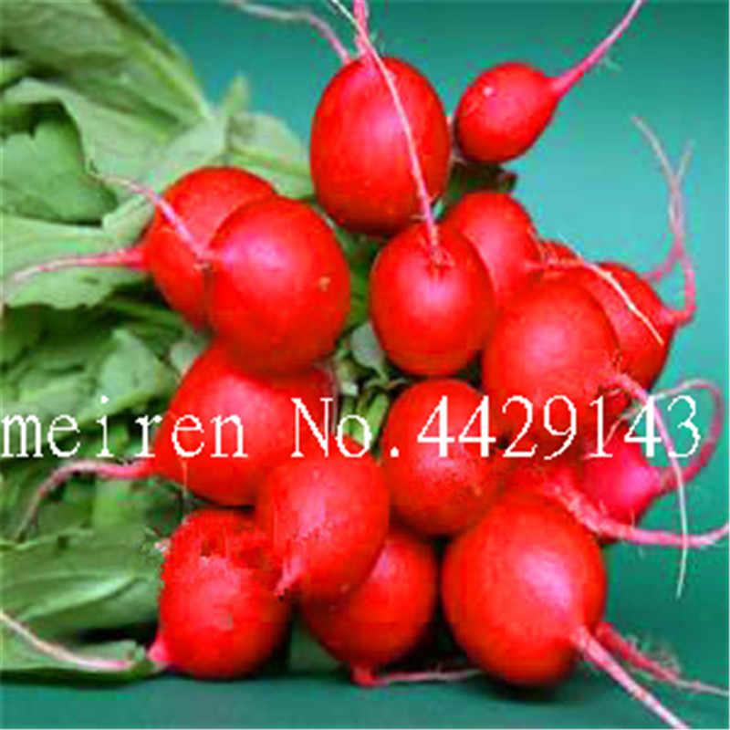 200 Pcs Japanes radish bonsai,Japanese Horseradish Non-Gmo Vegetable Bonsai for Home Garden,Easy to Grow,the Budding Rate 97%