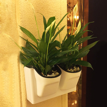 Potted Bracketplant Hanging Basket Flower Pot Wall Hanging Wall Water From Other Plant Resin Pouring 26.5X16X10cm