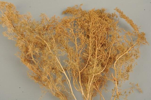 Scene model tree production Natural Quinoa Free Shipping