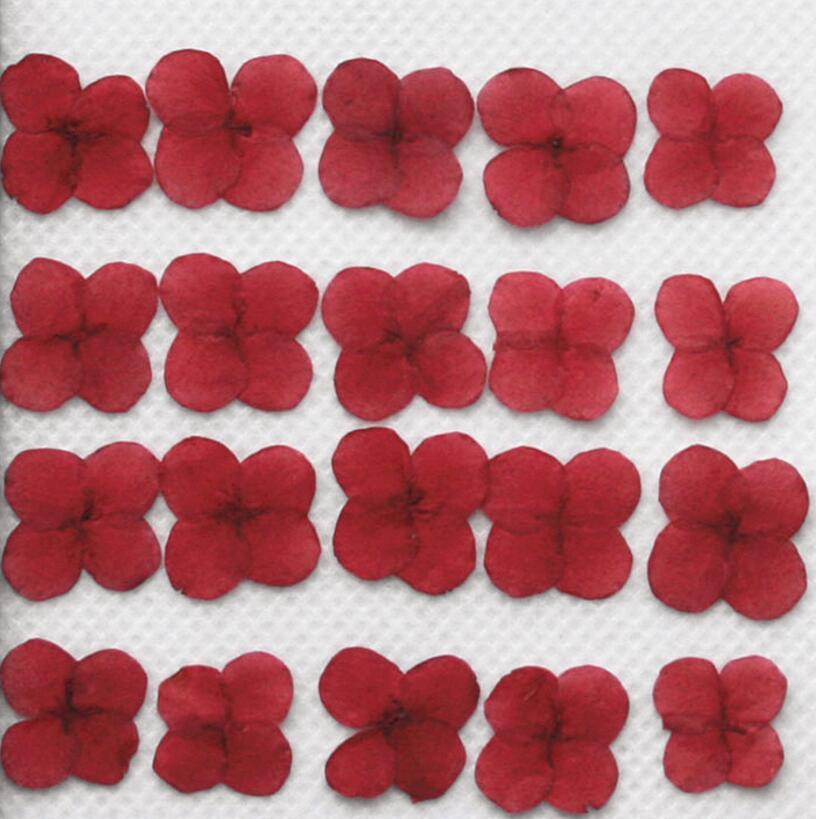 120 шт. нажатии сушеные 1 см красный Иксора цветочных растений гербарий для ювелирных изделий чехол для телефона фото Рамка Закладки DIY Создан...