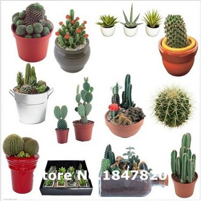 GGG 100pcs Radiation seeds cactus seeds succulents and colorful vibrant mixed breed seeds