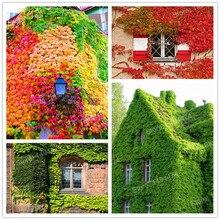 100 шт./пакет смешанные цвета Бостон Ivy Семена лианы зеленый бостон ivy семена трав Parthenocissus Tricuspidata Семена Для Дома Сад