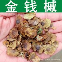 2017 Time-limited Seeds Wholesale Authentic Maple Tree Seed Money Precious Fruit Seeds Sprout Wheel High Real Shot 200g / Pack