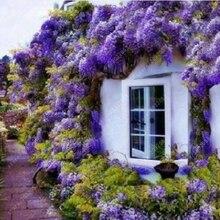 Wisteria seeds bonsai flower wisteria tree plant perennial flowers climbing growth for home garden 10 pcs/bag