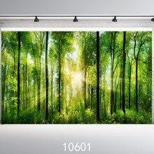 Лес солнечные фонари фото фон фотография фон Индивидуальные фон студия 9x6ft