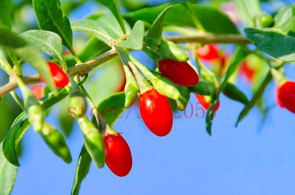 ягоды годжи с доставкой из России