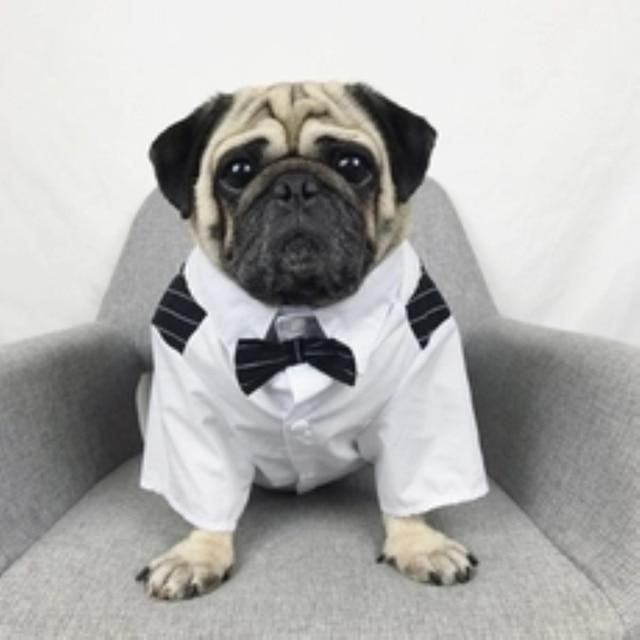 Bigeyedog Pug French Bulldog Clothes Male Dog Suit Wedding Clothing for Dog  Tuxedo Dropshipping Pet Clothes Party Costume Coat-in Dog Coats & Jackets  ...