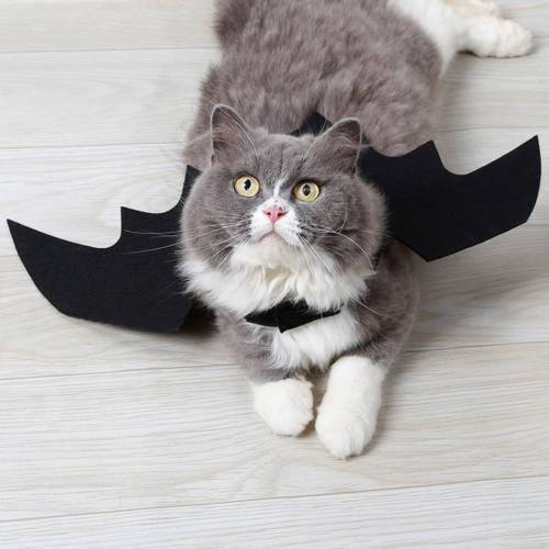Cute Bat Wings for Pet