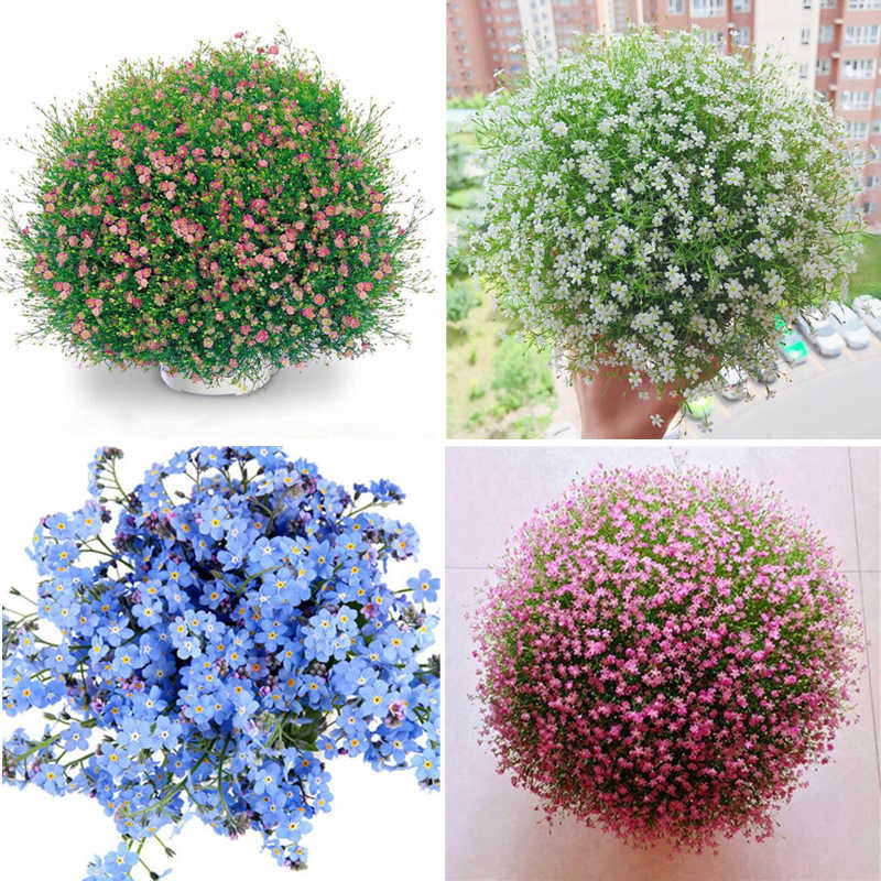 100 Pieces/Pack, Gypsophila Bonsai Garden Color Sky Stars Flower Decoration Plants Nature Growing Garden Potted For Wedding