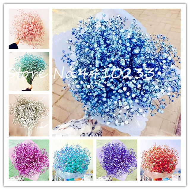 100 Pcs Colorful Gypsophila Paniculata Bonsai Romantic Gypsophila Paniculata Ornamental Flowers Garden Popular Decor Bonsai