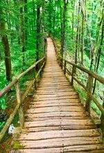 Laeacco лес деревянный мост дорожки фотографии Фоны винил настраиваемые фотографии фонов реквизит для Аксессуары для фотостудий