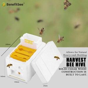 Image 4 - Bee Hive per Queen Apicoltura Queen Accoppiamento Alveare Benefitbee Marca Queen Alveare Strumenti di Apicoltura Apicoltura Apicoltore Scatola Alveare