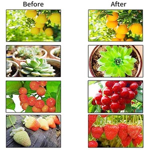 Image 5 - 300W LED grow light full spectrum phyto plant growth lamp for indoor Vegetable seedling Flower seedling tent fitolampy