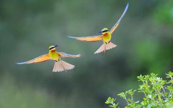 Queue d 39 oiseau ailes vol 4 tailles d coration toile for Oiseau decoration jardin