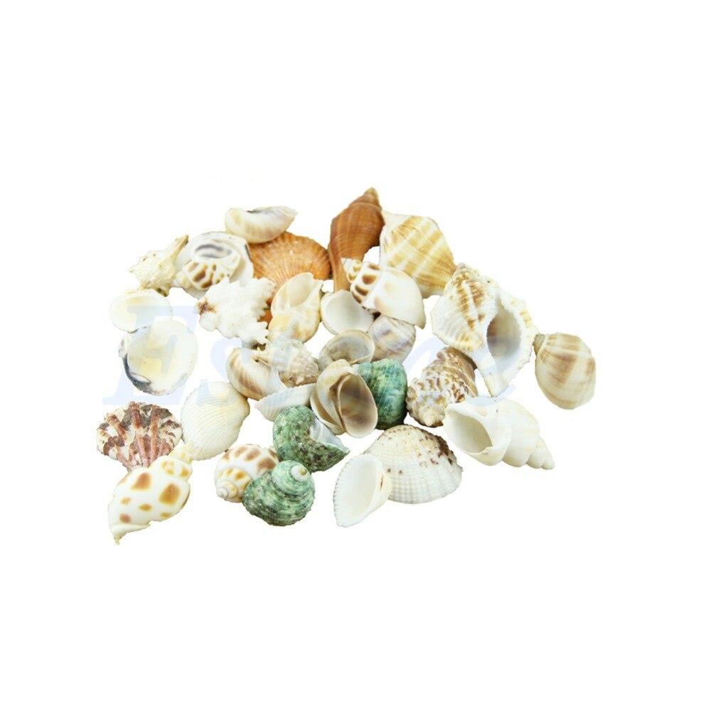Approx 100g Mixed Beach Seashells Mix Sea Shells Seashells