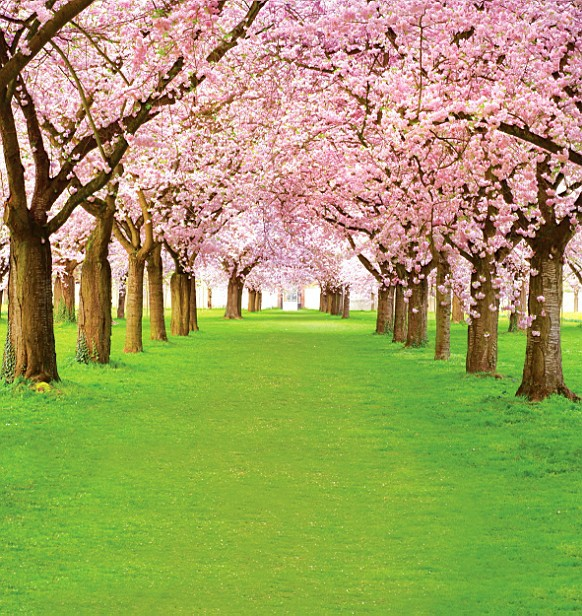 Free scenic spring photo Backdrop 2045,5*10ft vinyl photography,fondos fotografia,photo studio wedding background backdrop free scenic spring photo backdrop 1883 5 10ft vinyl photography fondos fotografia photo studio wedding background backdrop