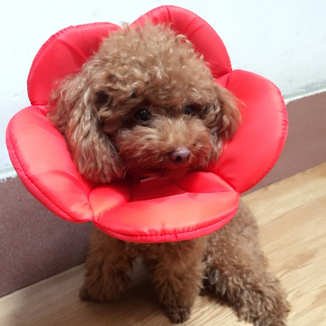 Flower Pattern Pet Cats Dogs Elizabethan Collar Recovery Pet Cone Protective Cover Elizabethan Collar DropShipping