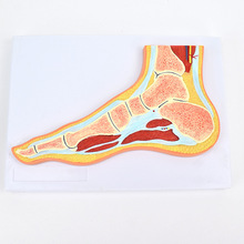 Structure Foot Joint Model